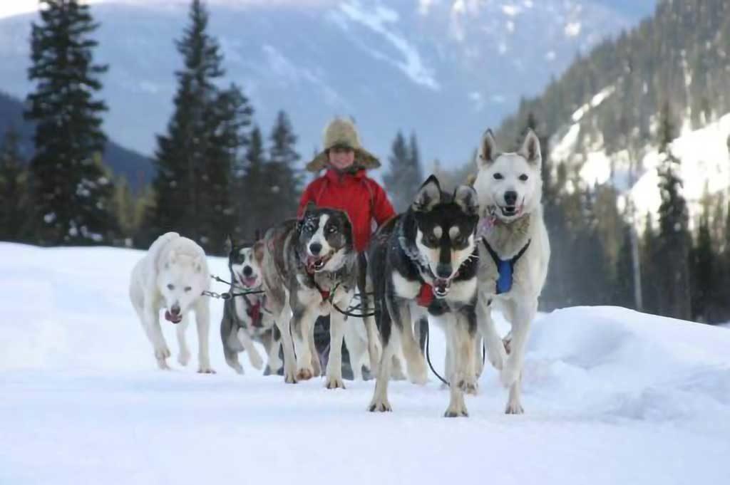 Dog sledding in Valemount