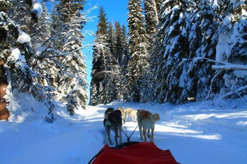 View from the sled, dogsledding