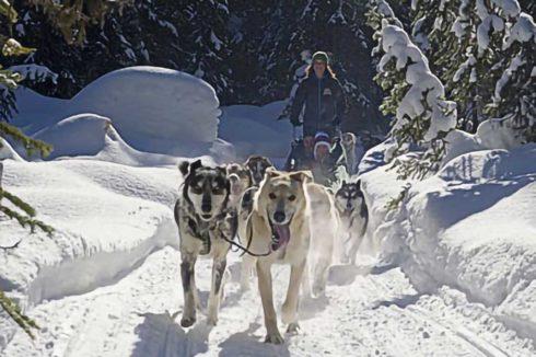 Dog sledding on groomed trail