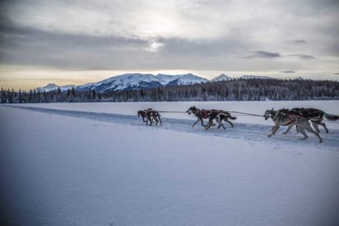 Dogs pulling sled across open snowfield